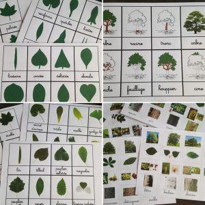 les arbres cartes de nomenclature