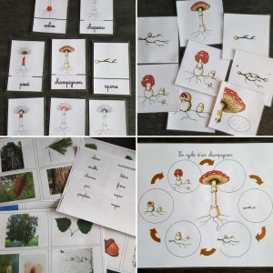 ressources champignons